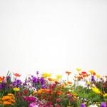 Tratamento para engravidar: a primavera pode ser sua aliada