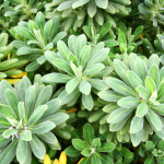 Decoração: Aprenda quais plantas escolher para um jardim em casa