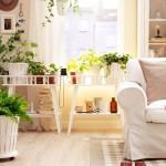 Decore os ambientes da casa com plantas ornamentais