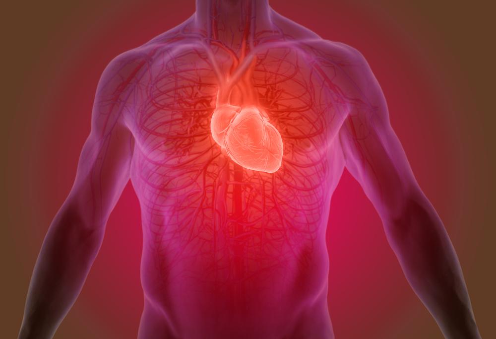 Doenças Cardiovasculares: imagem ilustrativa do coração humano
