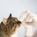 A importância de vermifugar os animais de estimação