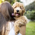 Qual a importância de um pet para a saúde mental?